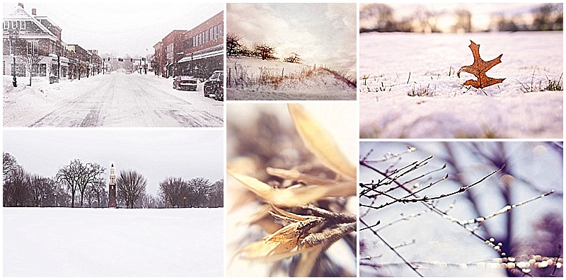 andover, nature, phillips academy, photography