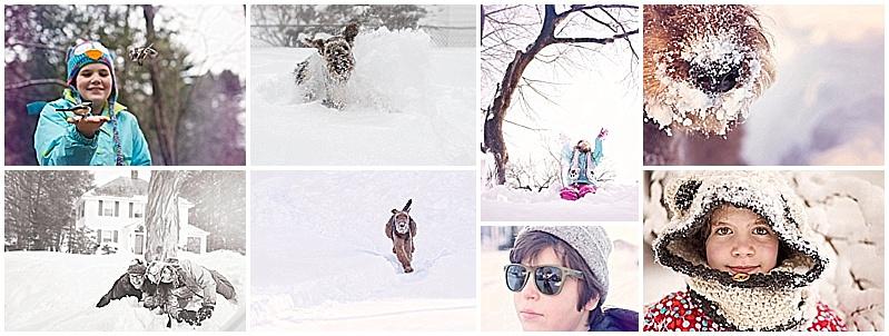 photography, snow, audubon, airedale, portrait